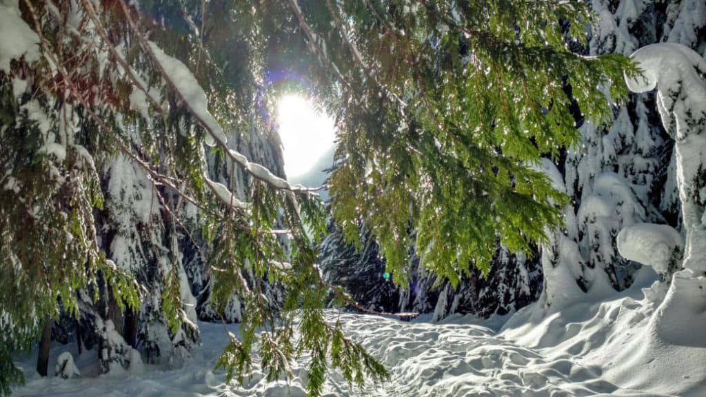 snow and trees along trail
