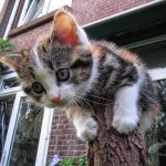 kitten lonely at top