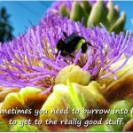 Burrow Into Life (a bee in an artichoke flower)
