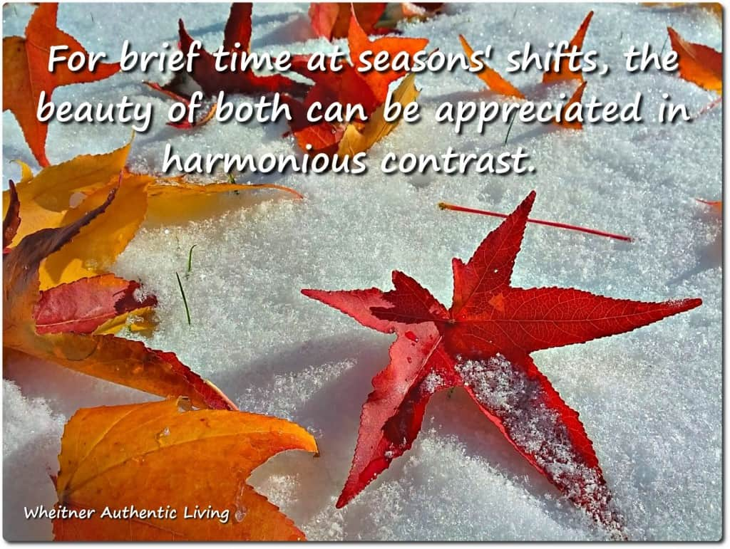 seasons shifts, seeking beauty in contrast of life transitions (leaves in snow)