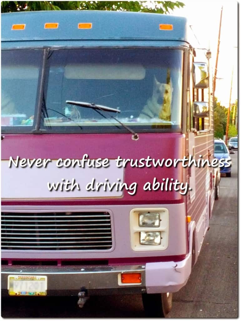 humorous dog photo about trust and driving ability