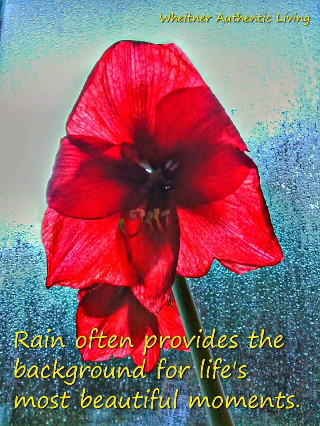 Amaryllis in rainy window--life's beautiful moments