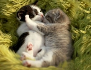 kittens snuggling and cuddling