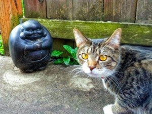 kitty with Buddha