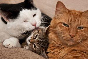 snuggling, cuddling cats